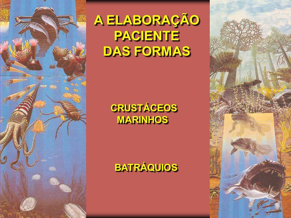 OS PRIMEIROS HABITANTES DA TERRA DAS AMEBAS...DAS AMEBAS...