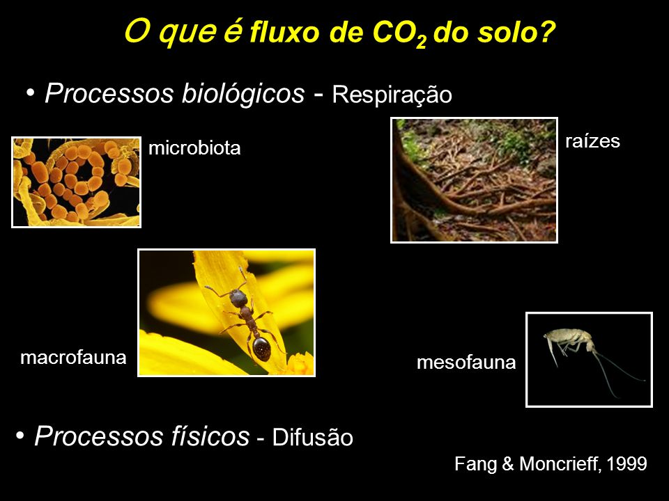 O que é fluxo de CO 2 do solo? Processos biológicos - Respiração Processos físicos - Difusão Fang & Moncrieff, 1999 microbiota raízes mesofauna macrof