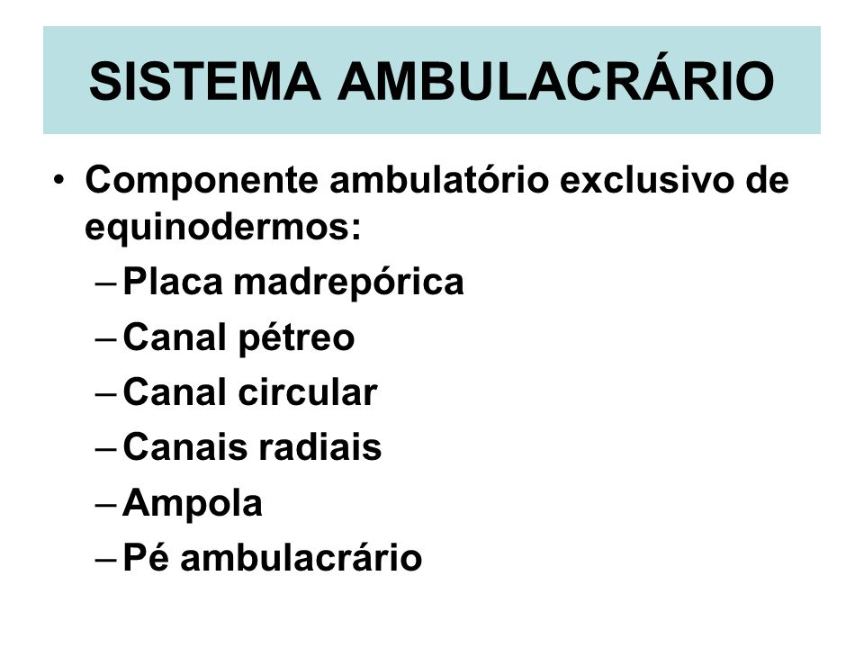 SISTEMA AMBULACRÁRIO Componente ambulatório exclusivo de equinodermos: –Placa madrepórica –Canal pétreo –Canal circular –Canais radiais –Ampola –Pé am