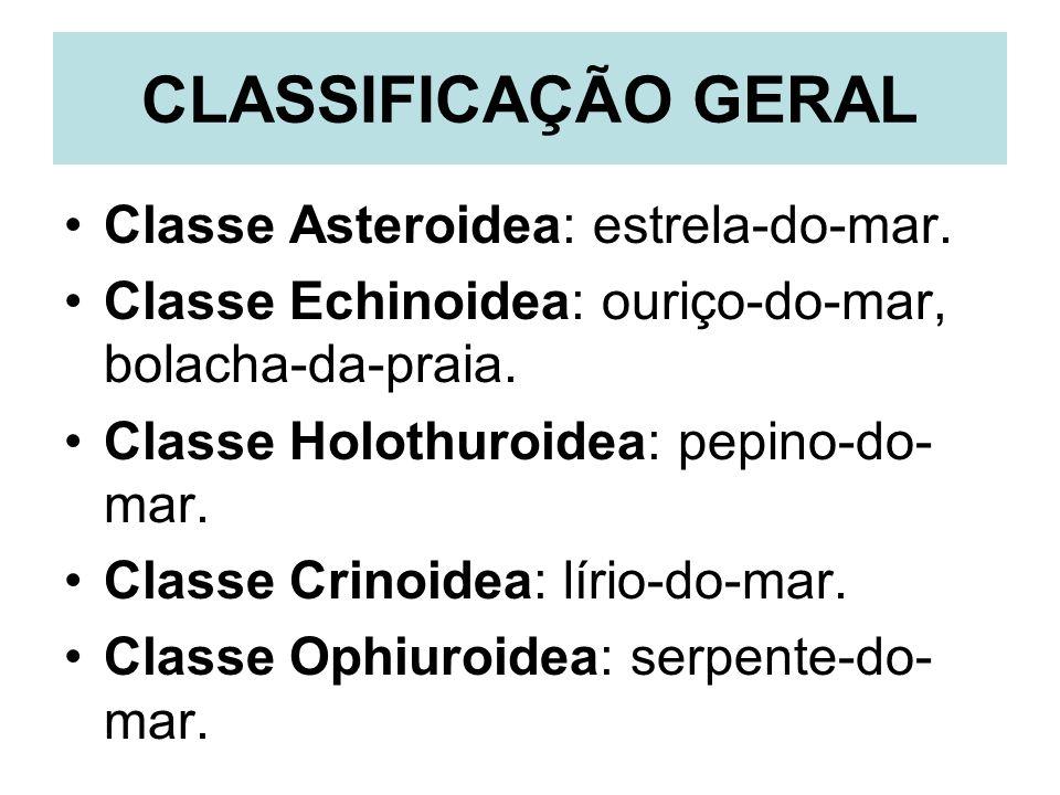CLASSIFICAÇÃO GERAL Classe Asteroidea: estrela-do-mar. Classe Echinoidea: ouriço-do-mar, bolacha-da-praia. Classe Holothuroidea: pepino-do- mar. Class
