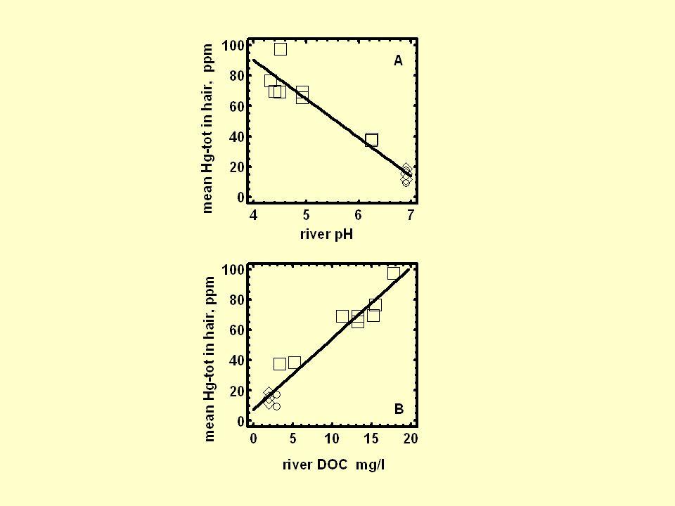 As concentrações de Hg em P<40 m nos lagos do rio Negro (452 ± 175 ng/g) são quase que o dobro daquelas encontradas nos lagos do rio Tapajós (264 ± 136 ng/g) (F 1, 22 = 8,66; p = 0,007).