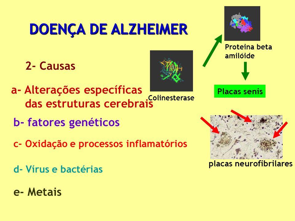 DOENÇA DE ALZHEIMER 2- Causas Proteina beta amilóide placas neurofibrilares Colinesterase a- Alterações específicas das estruturas cerebrais b- fatore
