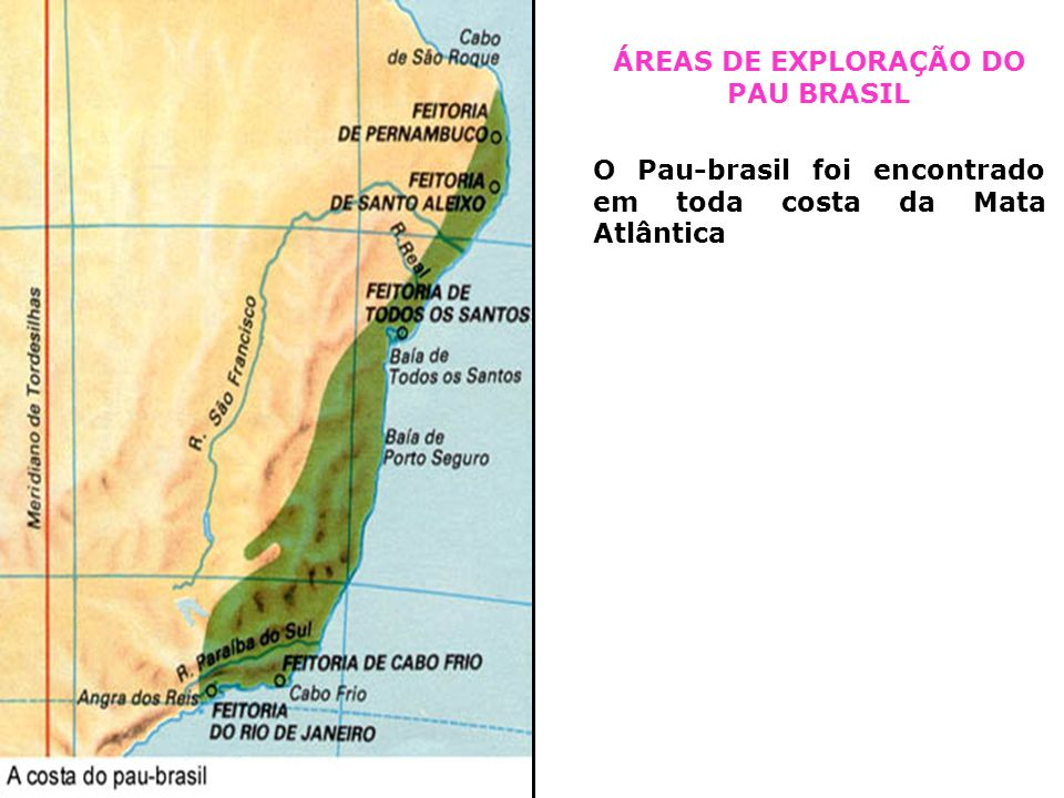 ÁREAS DE EXPLORAÇÃO DO PAU BRASIL O Pau-brasil foi encontrado em toda costa da Mata Atlântica