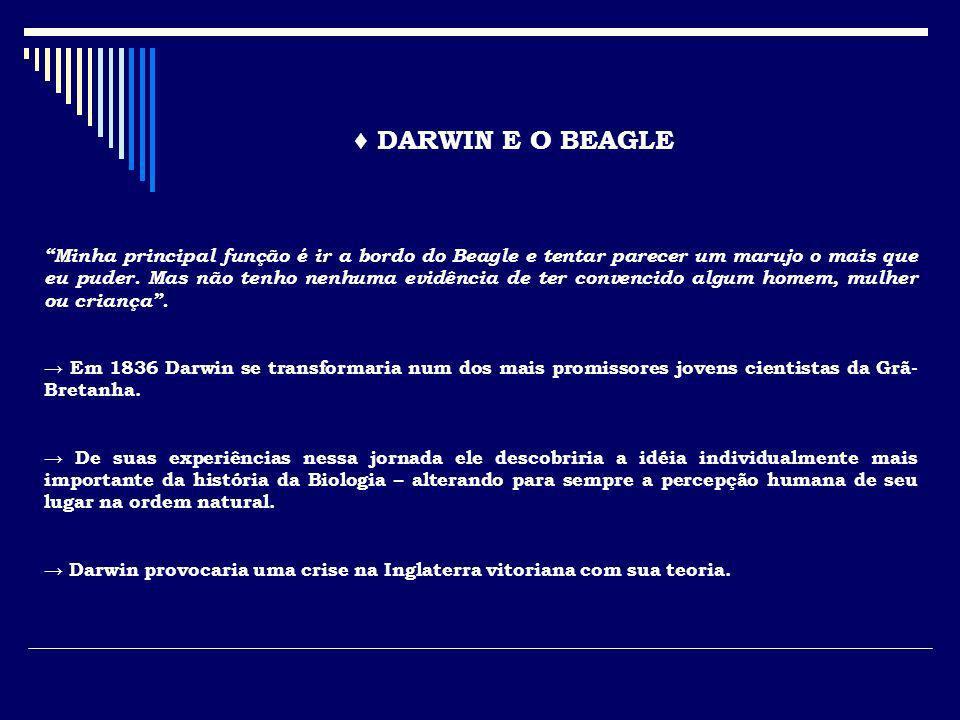 DARWIN E O BEAGLE Minha principal função é ir a bordo do Beagle e tentar parecer um marujo o mais que eu puder. Mas não tenho nenhuma evidência de ter