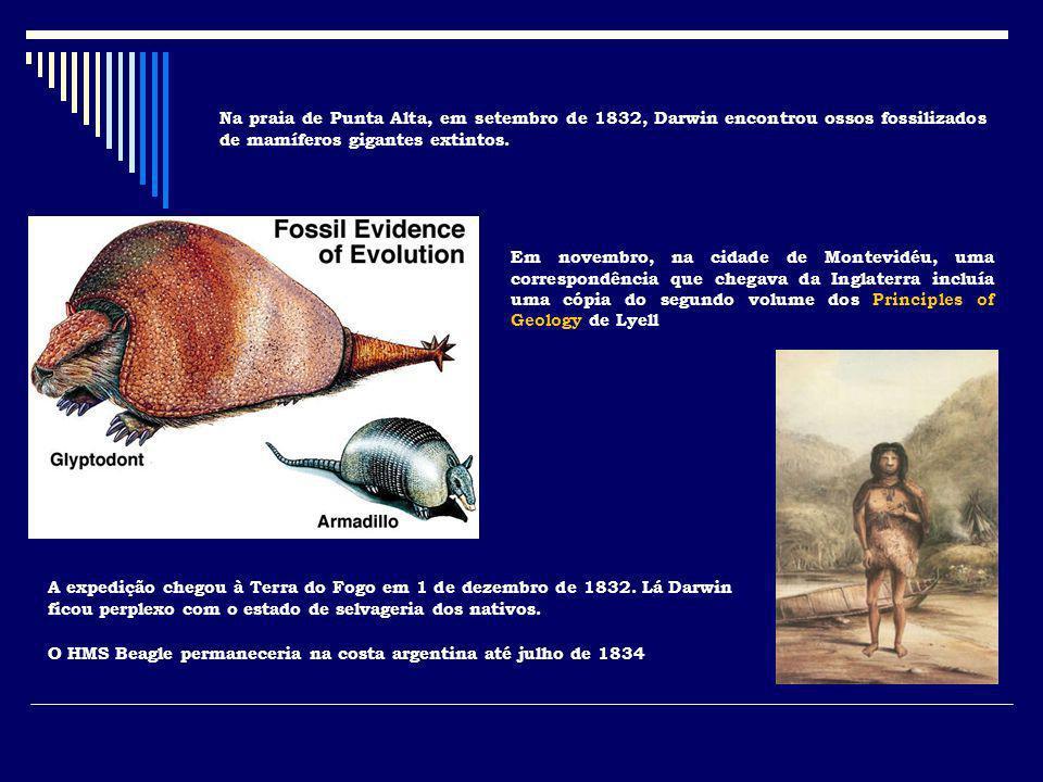 Na praia de Punta Alta, em setembro de 1832, Darwin encontrou ossos fossilizados de mamíferos gigantes extintos. Em novembro, na cidade de Montevidéu,
