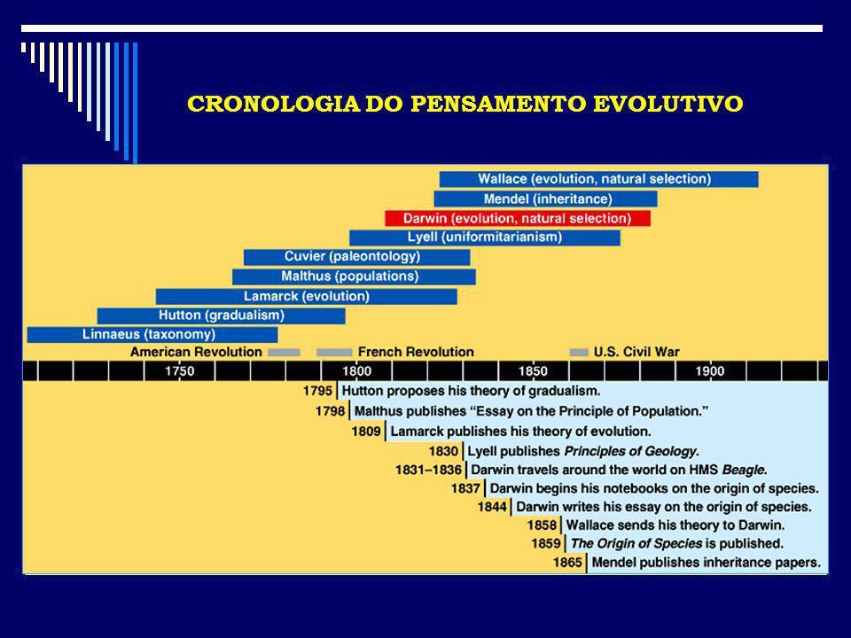 Lagarto voador ( Draco volans ) Lagarto voador ( Ptychozoon kuhli ) Serpente voadora ( Chrysopelea paradisi )