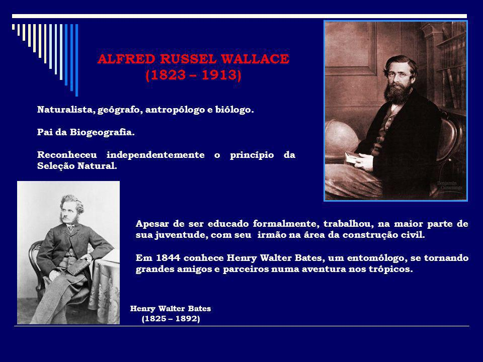 ALFRED RUSSEL WALLACE (1823 – 1913) Naturalista, geógrafo, antropólogo e biólogo. Pai da Biogeografia. Reconheceu independentemente o princípio da Sel