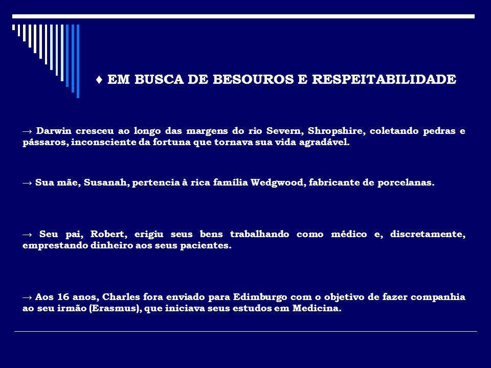 Biguá de Galápagos ( Phalacrocorax harrisi ) Falcão de Galápagos ( Buteo galapagoensis ) Fragata Menor ( Fregata minor ) Fragata Magnífica ( Fregata magnificens ) Pinguin de Galápagos ( Spheniscus mendiculus ) Booby-de pé-azul ( Sula nebouxii ) OUTROS ENDEMISMOS