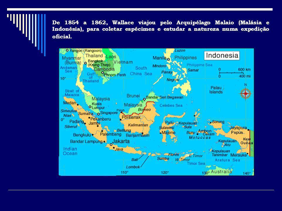 De 1854 a 1862, Wallace viajou pelo Arquipélago Malaio (Malásia e Indonésia), para coletar espécimes e estudar a natureza numa expedição oficial.