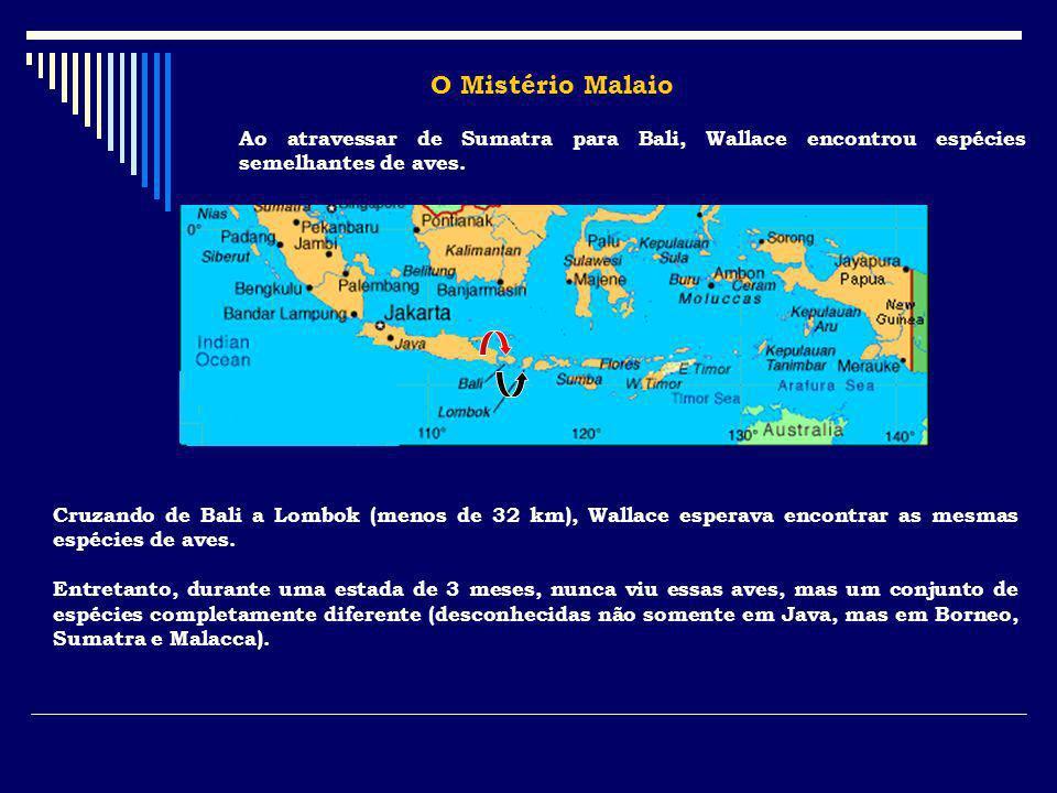 O Mistério Malaio Ao atravessar de Sumatra para Bali, Wallace encontrou espécies semelhantes de aves. Cruzando de Bali a Lombok (menos de 32 km), Wall