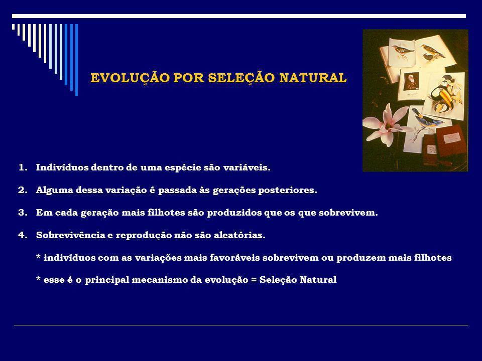 EVOLUÇÃO POR SELEÇÃO NATURAL 1.Indivíduos dentro de uma espécie são variáveis. 2.Alguma dessa variação é passada às gerações posteriores. 3.Em cada ge