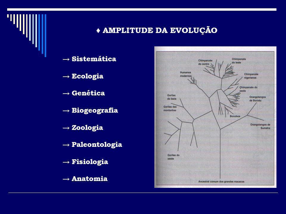 AMPLITUDE DA EVOLUÇÃO Sistemática Ecologia Genética Biogeografia Zoologia Paleontologia Fisiologia Anatomia