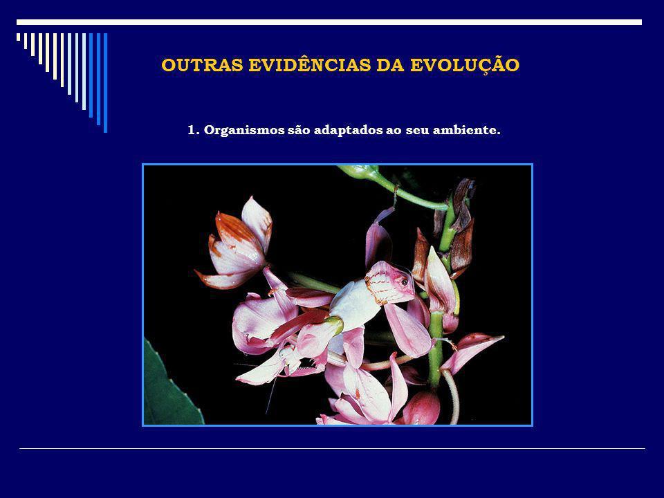 OUTRAS EVIDÊNCIAS DA EVOLUÇÃO 1. Organismos são adaptados ao seu ambiente.