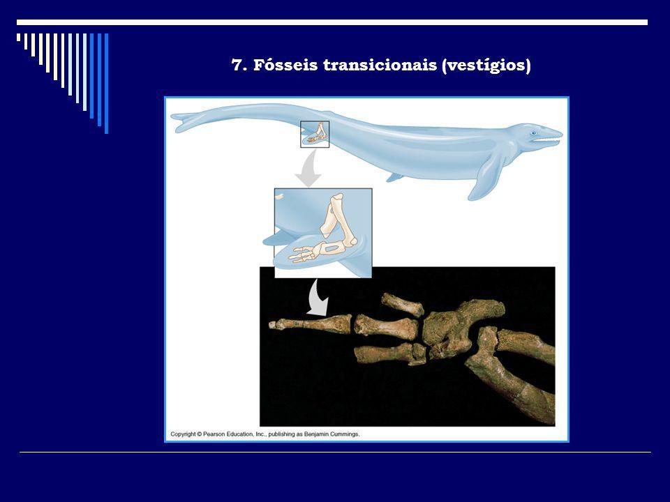 7. Fósseis transicionais (vestígios)