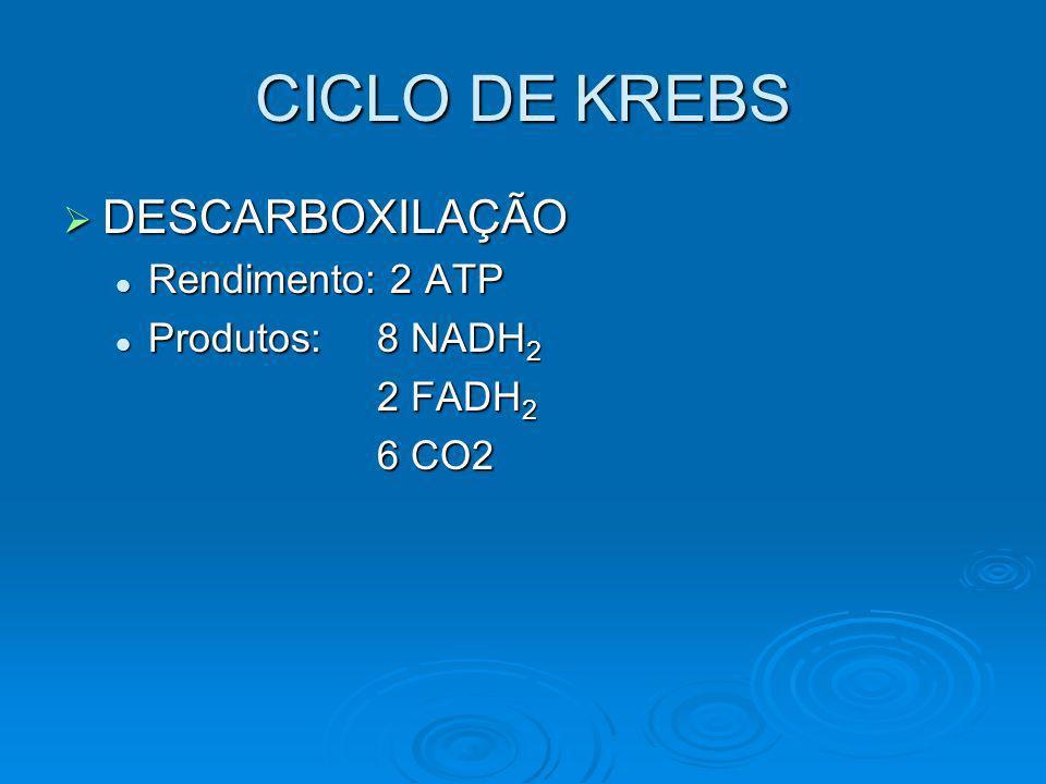 CICLO DE KREBS DESCARBOXILAÇÃO DESCARBOXILAÇÃO Rendimento: 2 ATP Rendimento: 2 ATP Produtos: 8 NADH 2 Produtos: 8 NADH 2 2 FADH 2 6 CO2