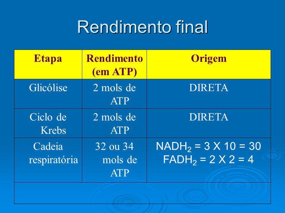 Rendimento final EtapaRendimento (em ATP) Origem Glicólise2 mols de ATP DIRETA Ciclo de Krebs 2 mols de ATP DIRETA Cadeia respiratória 32 ou 34 mols d