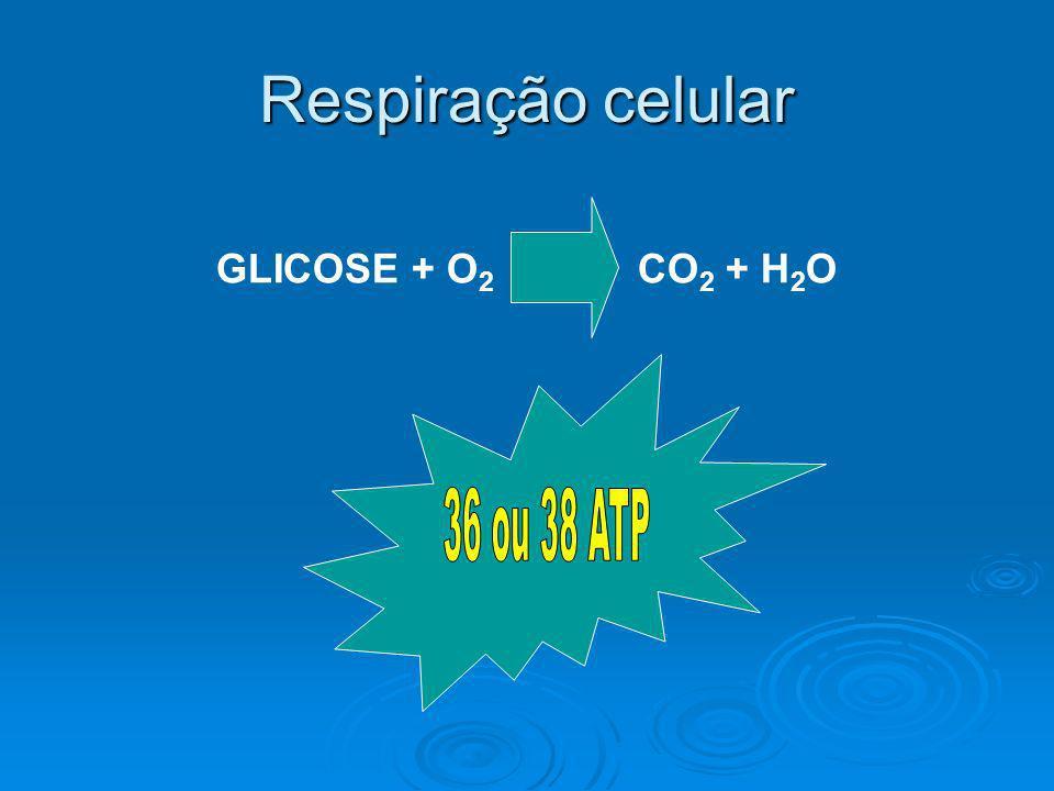 Respiração celular GLICOSE + O 2 CO 2 + H 2 O