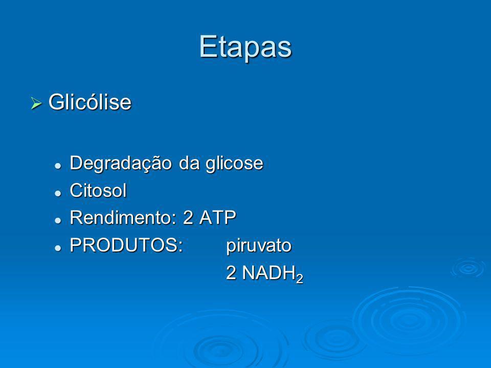 Etapas Glicólise Glicólise Degradação da glicose Degradação da glicose Citosol Citosol Rendimento: 2 ATP Rendimento: 2 ATP PRODUTOS: piruvato PRODUTOS