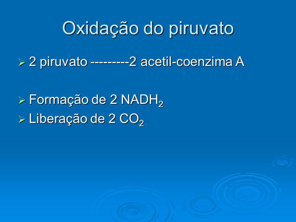 Oxidação do piruvato 2 piruvato ---------2 acetil-coenzima A 2 piruvato ---------2 acetil-coenzima A Formação de 2 NADH 2 Formação de 2 NADH 2 Liberaç