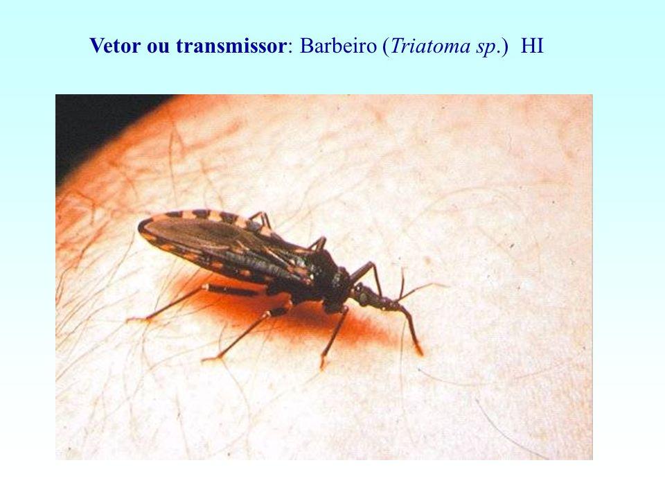 Agente etiológico : Plasmodium sp.