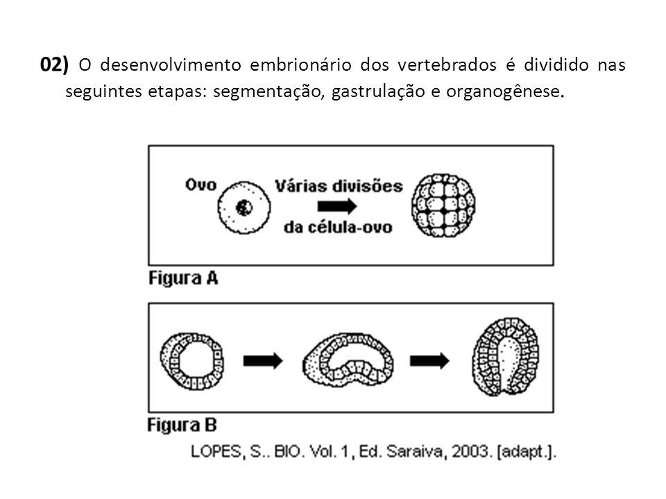 02) O desenvolvimento embrionário dos vertebrados é dividido nas seguintes etapas: segmentação, gastrulação e organogênese.