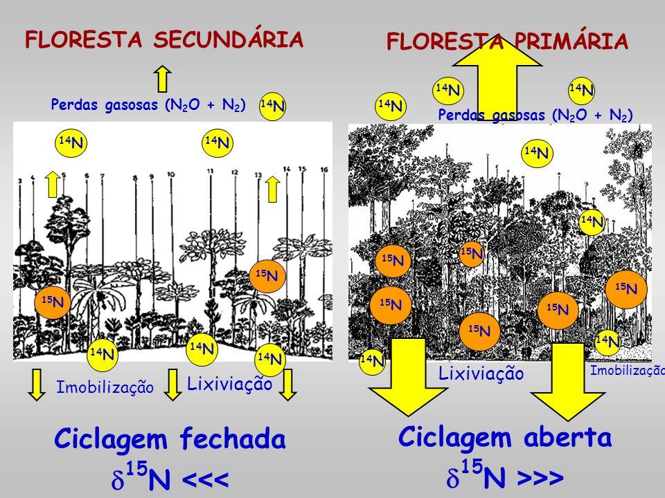 FLORESTA SECUNDÁRIA Perdas gasosas (N 2 O + N 2 ) 15 N 14 N 15 N 14 N 15 N <<< 15 N >>> 15 N FLORESTA PRIMÁRIA Perdas gasosas (N 2 O + N 2 ) Ciclagem