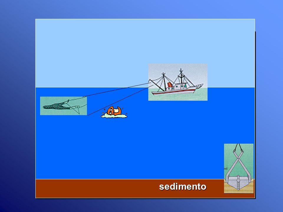 sedimento sedimento