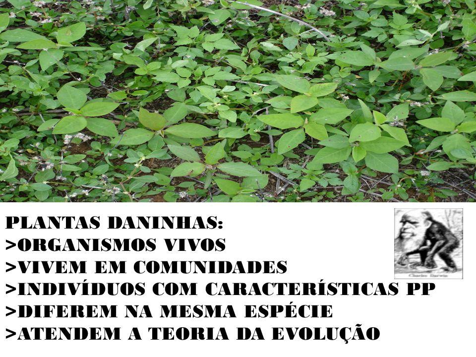 PLANTAS DANINHAS: >ORGANISMOS VIVOS >VIVEM EM COMUNIDADES >INDIVÍDUOS COM CARACTERÍSTICAS PP >DIFEREM NA MESMA ESPÉCIE >ATENDEM A TEORIA DA EVOLUÇÃO