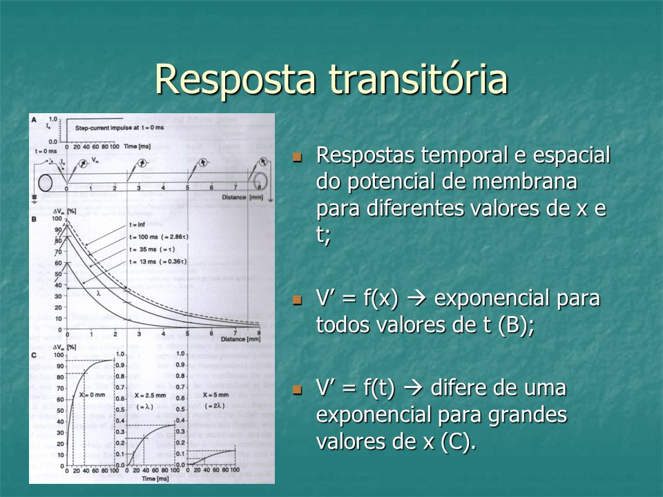 Resposta transitória Respostas temporal e espacial do potencial de membrana para diferentes valores de x e t; Respostas temporal e espacial do potenci