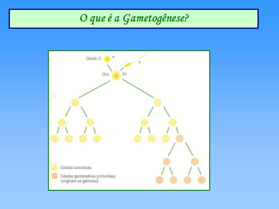 O que é a Gametogênese?