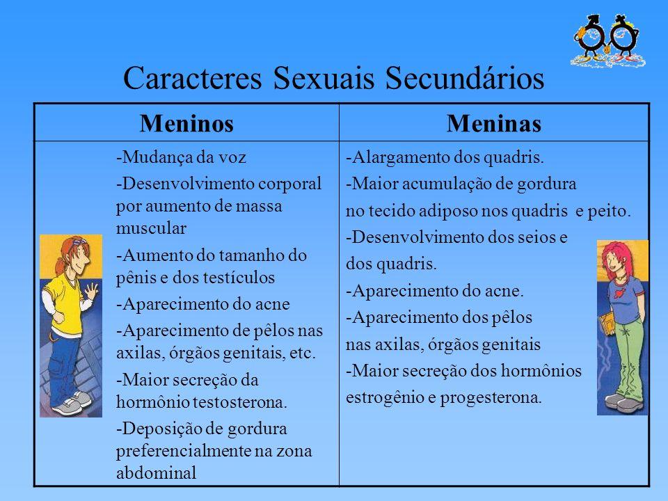 Caracteres Sexuais Secundários MeninosMeninas -Mudança da voz -Desenvolvimento corporal por aumento de massa muscular -Aumento do tamanho do pênis e d