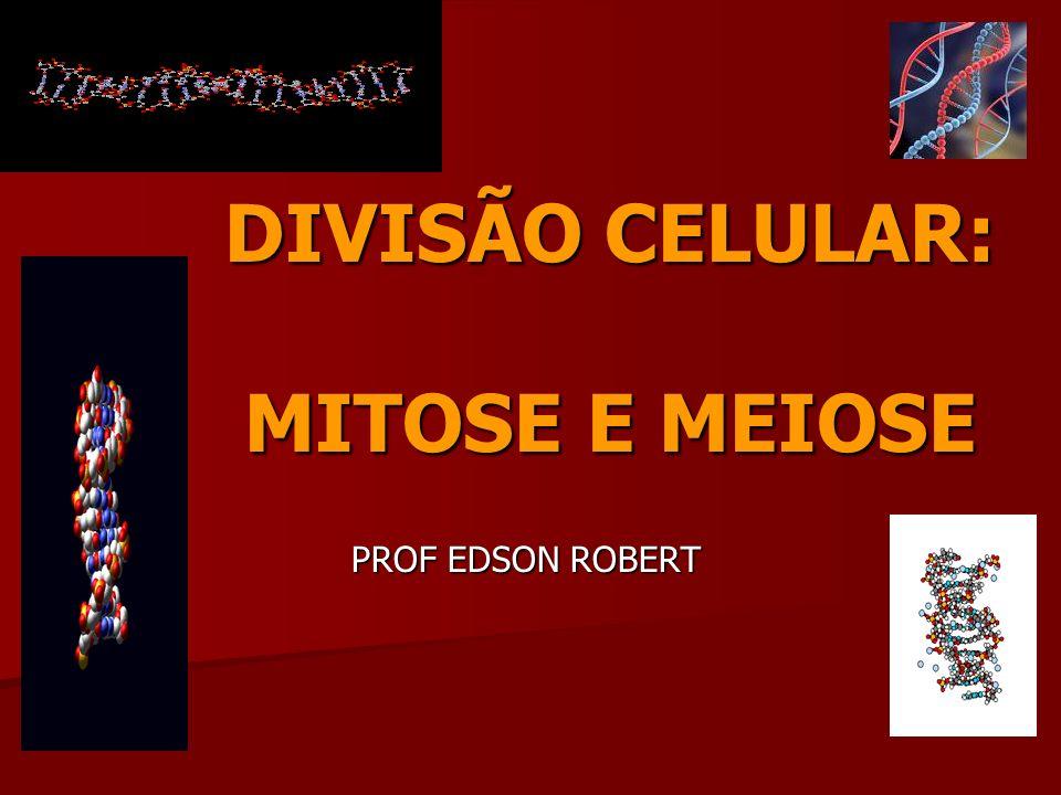 DIVISÃO CELULAR: MITOSE E MEIOSE PROF EDSON ROBERT