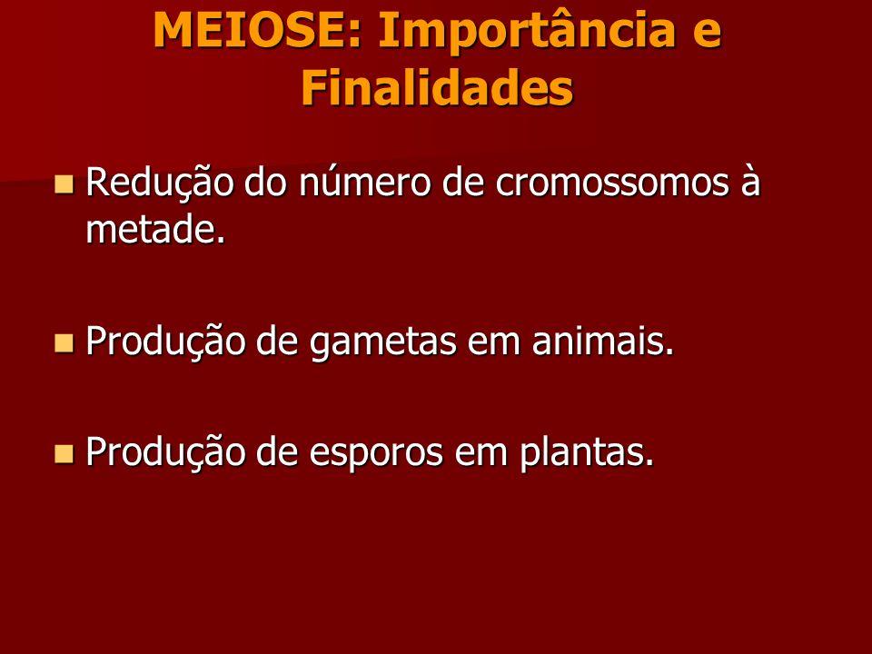 MEIOSE A meiose ocorre apenas nas células das linhagens germinativas masculina e feminina e é constituída por duas divisões celulares: Meiose I e Meiose II.