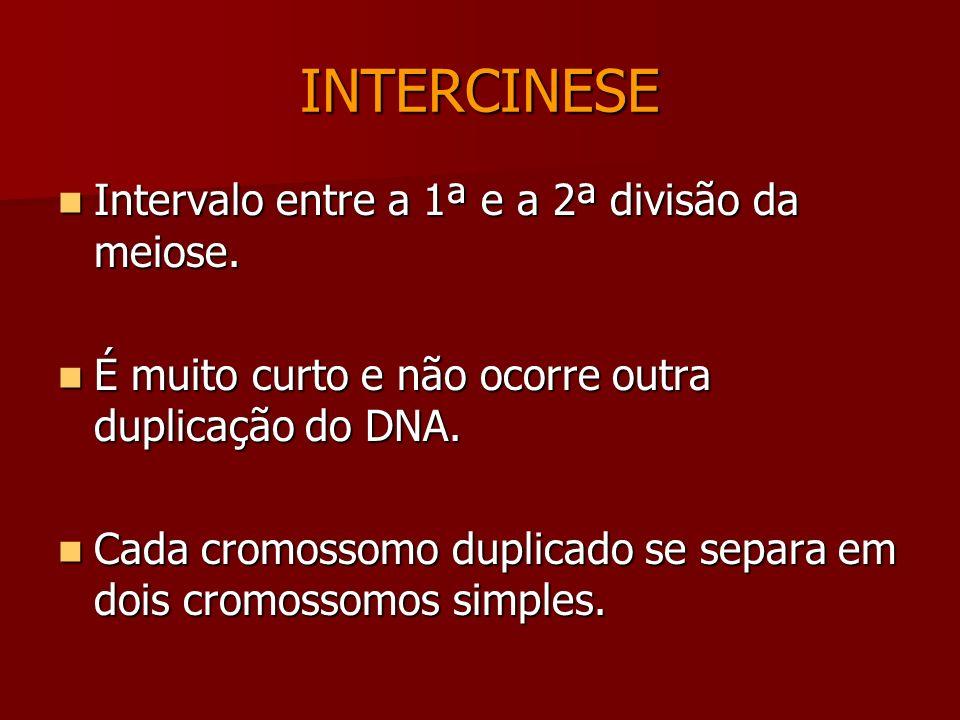 Telófase 1 Descondensação dos cromossomos Descondensação dos cromossomos Reaparecimento do nucléolo e carioteca Reaparecimento do nucléolo e carioteca