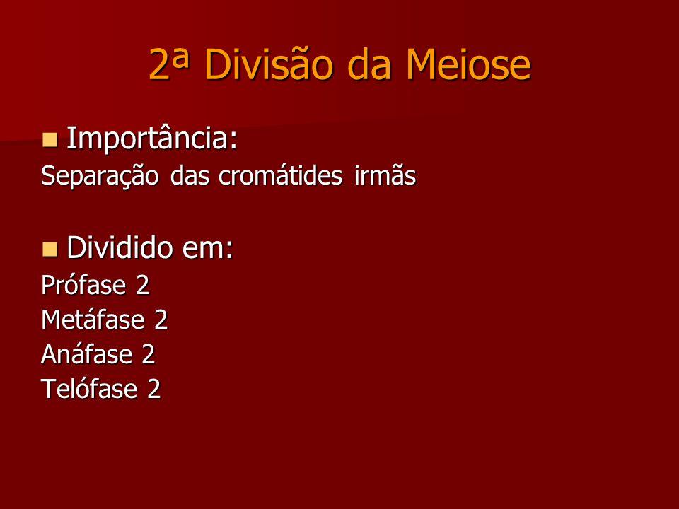 INTERCINESE Intervalo entre a 1ª e a 2ª divisão da meiose.