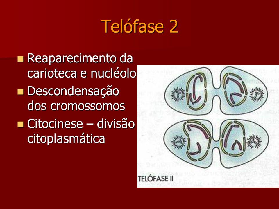 Anáfase 2 Migração das cromátides irmãs para os pólos opostos da célula. Migração das cromátides irmãs para os pólos opostos da célula.