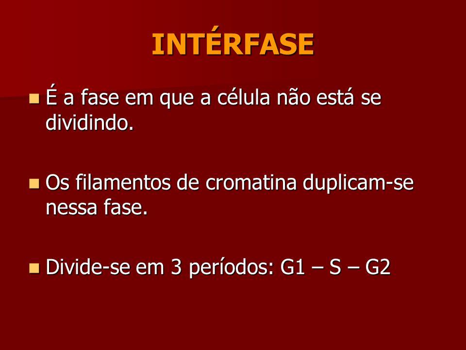 FASES DO CICLO CELULAR MITOSECITOCINESE INTERFASEFASE MITÓTICA CICLO CELULAR