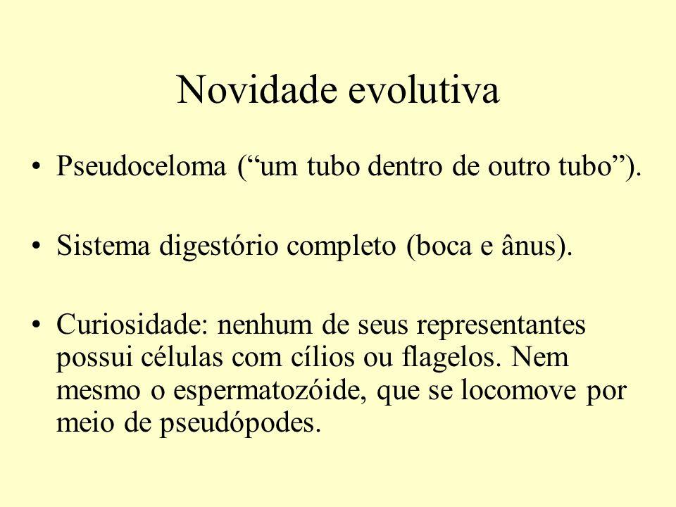 Novidade evolutiva Pseudoceloma (um tubo dentro de outro tubo). Sistema digestório completo (boca e ânus). Curiosidade: nenhum de seus representantes