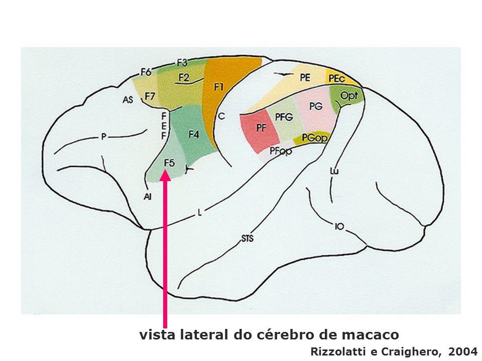 vista lateral do cérebro de macaco Rizzolatti e Craighero, 2004