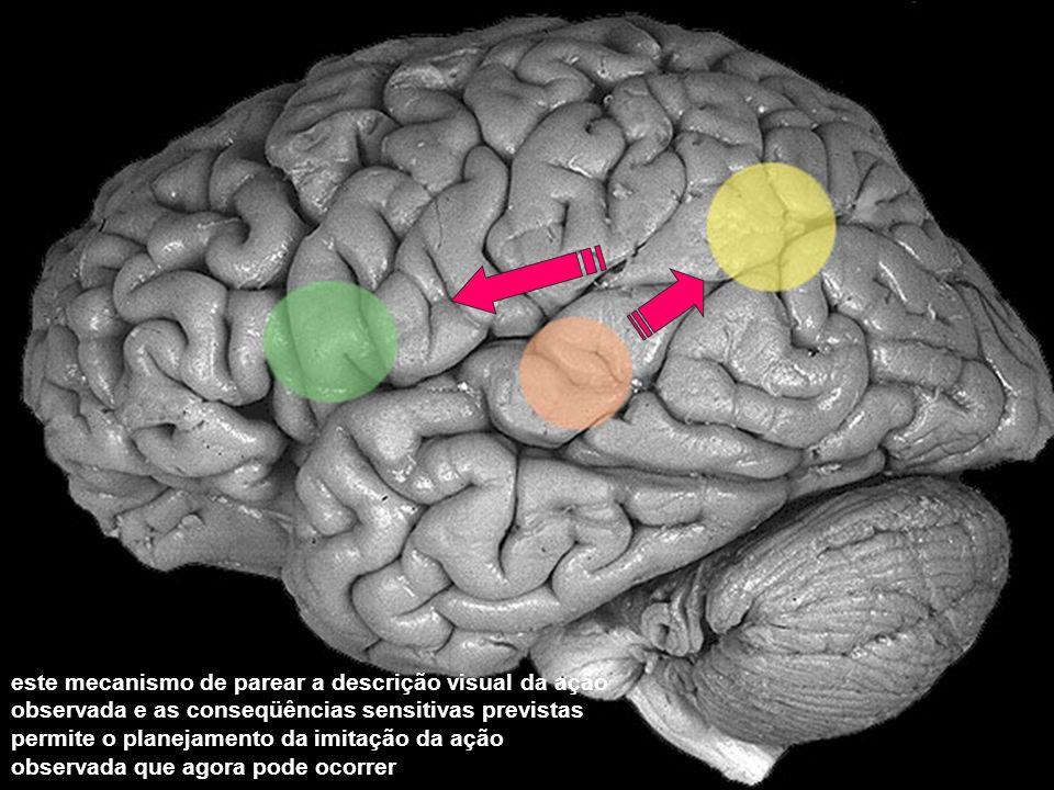este mecanismo de parear a descrição visual da ação observada e as conseqüências sensitivas previstas permite o planejamento da imitação da ação obser