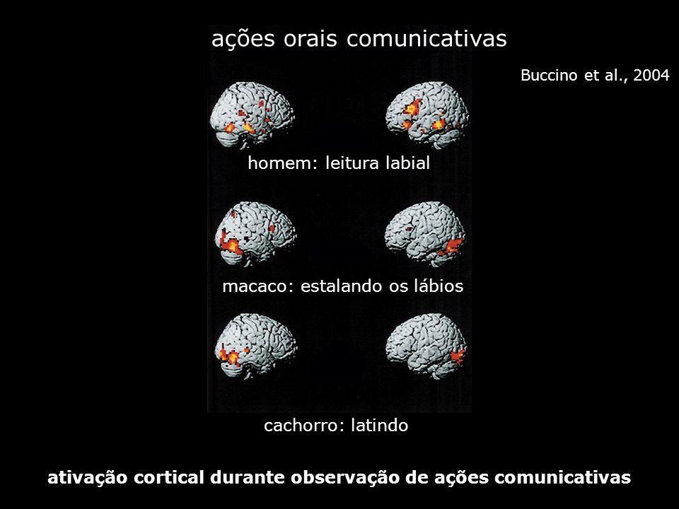 ações orais comunicativas homem: leitura labial macaco: estalando os lábios cachorro: latindo ativação cortical durante observação de ações comunicati