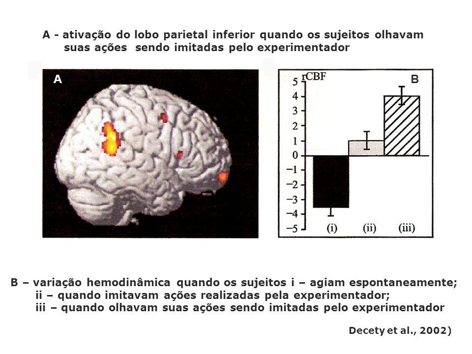 A - ativação do lobo parietal inferior quando os sujeitos olhavam suas ações sendo imitadas pelo experimentador A B B – variação hemodinâmica quando o