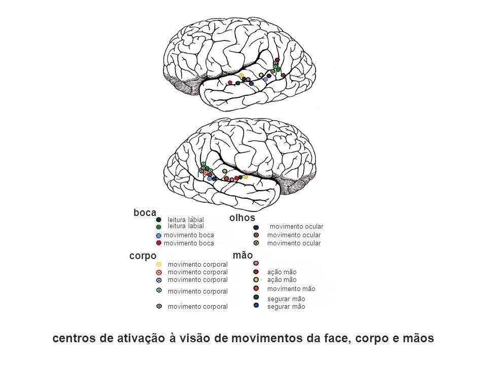 boca olhos corpo mão leitura labial movimento boca movimento corporal movimento ocular ação mão movimento mão segurar mão centros de ativação à visão