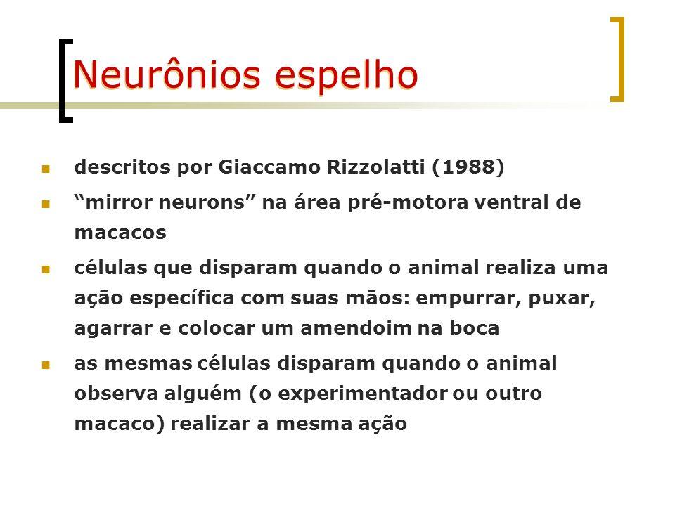 Neurônios espelho Rizzolatti et al., estudando descargas neuronais na área pré-motora (área F5 - frontal) de macacos observou neurônios que respondiam: a movimentos distais quando efetores (mão direita, mão esquerda e boca) apanhavam um objeto a estímulos visuais: à simples visão de um objeto que poderia ser apanhado (neurônios canônicos) à visão de um outro indivíduo realizando uma ação à sua vista neurônios espelho)