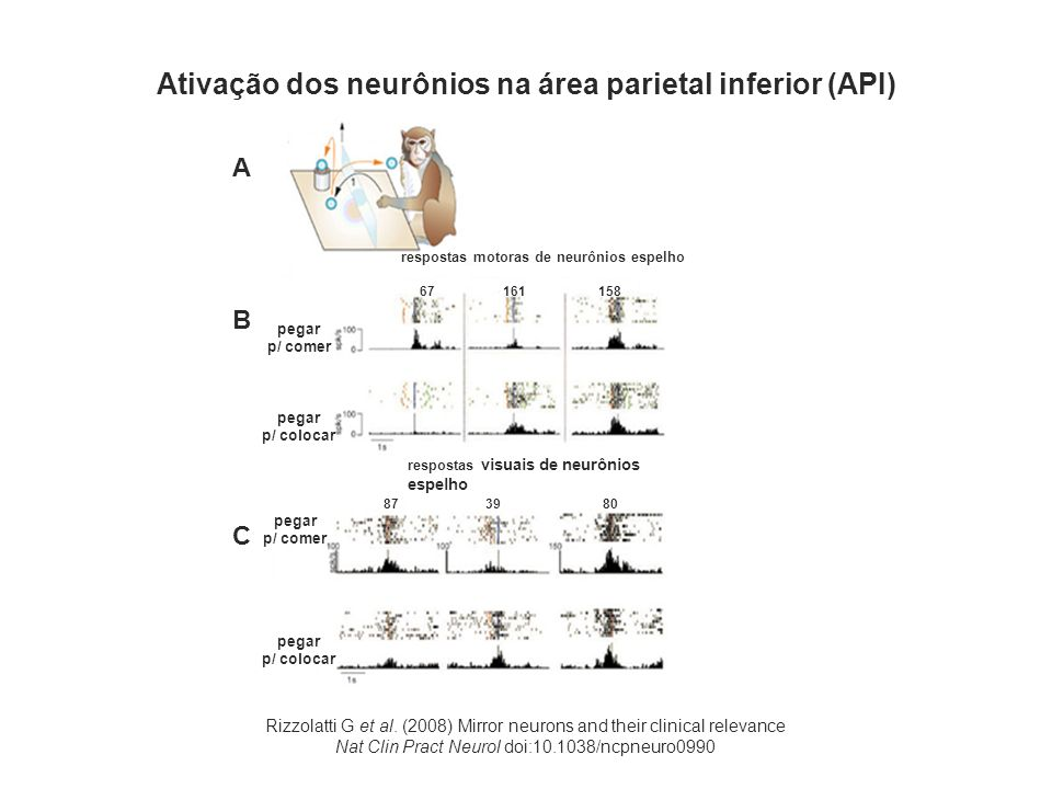 Rizzolatti G et al. (2008) Mirror neurons and their clinical relevance Nat Clin Pract Neurol doi:10.1038/ncpneuro0990 Ativação dos neurônios na área p
