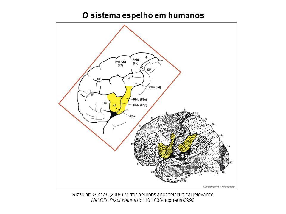 respostas de neurônios espelho em macacos frente a estímulos: diversos: mão x pinça (Gallese et al., 1996)