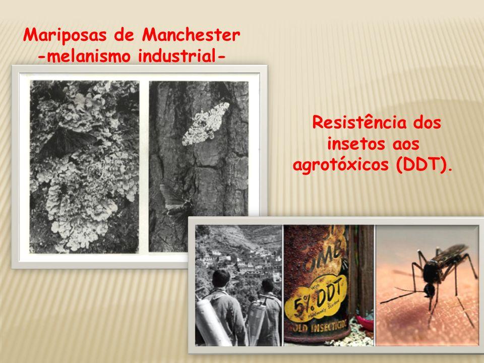 Mariposas de Manchester -melanismo industrial- Resistência dos insetos aos agrotóxicos (DDT).