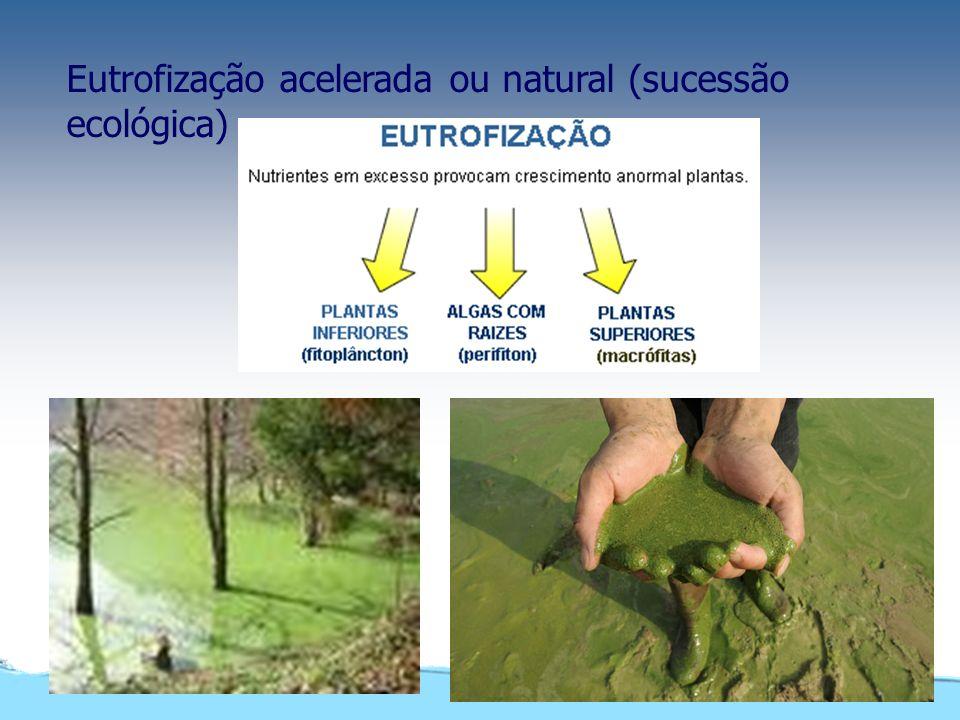 Tipos de poluentes Poluentes não-orgânicos Minerais e sais solúveis Poluentes orgânicos Grama, folhas mortas, excrementos humanos e animais Origem: de
