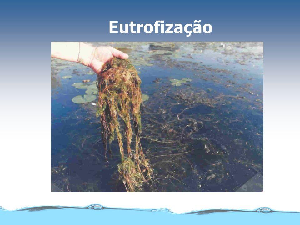 Eutrofização acelerada ou natural (sucessão ecológica)
