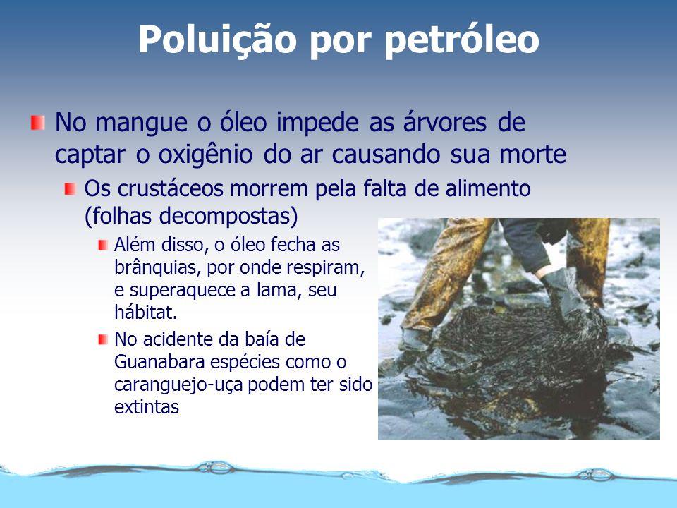 Poluição por petróleo As aves marinhas ficam com o corpo impregnado de óleo Deixam de reter o ar entre as penas e morrem afogadas ao mergulhar O óleo